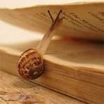 'Slow is beautiful, silence is everything' – een ingetogen literair festival in Leuven